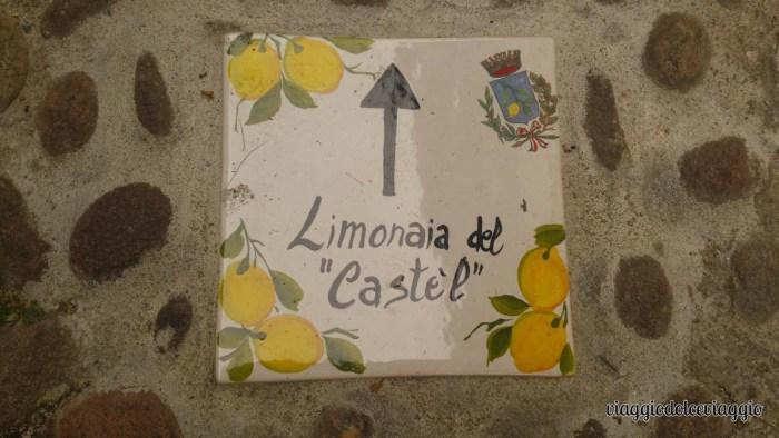 12-limone-lago-di-garda (2)