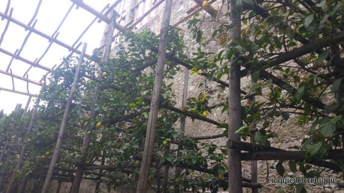 12-limone-lago-di-garda (4)