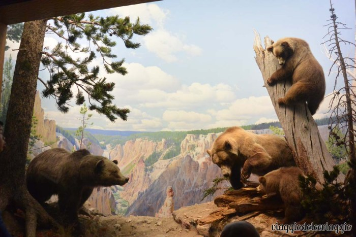 Museo di storia naturale New York