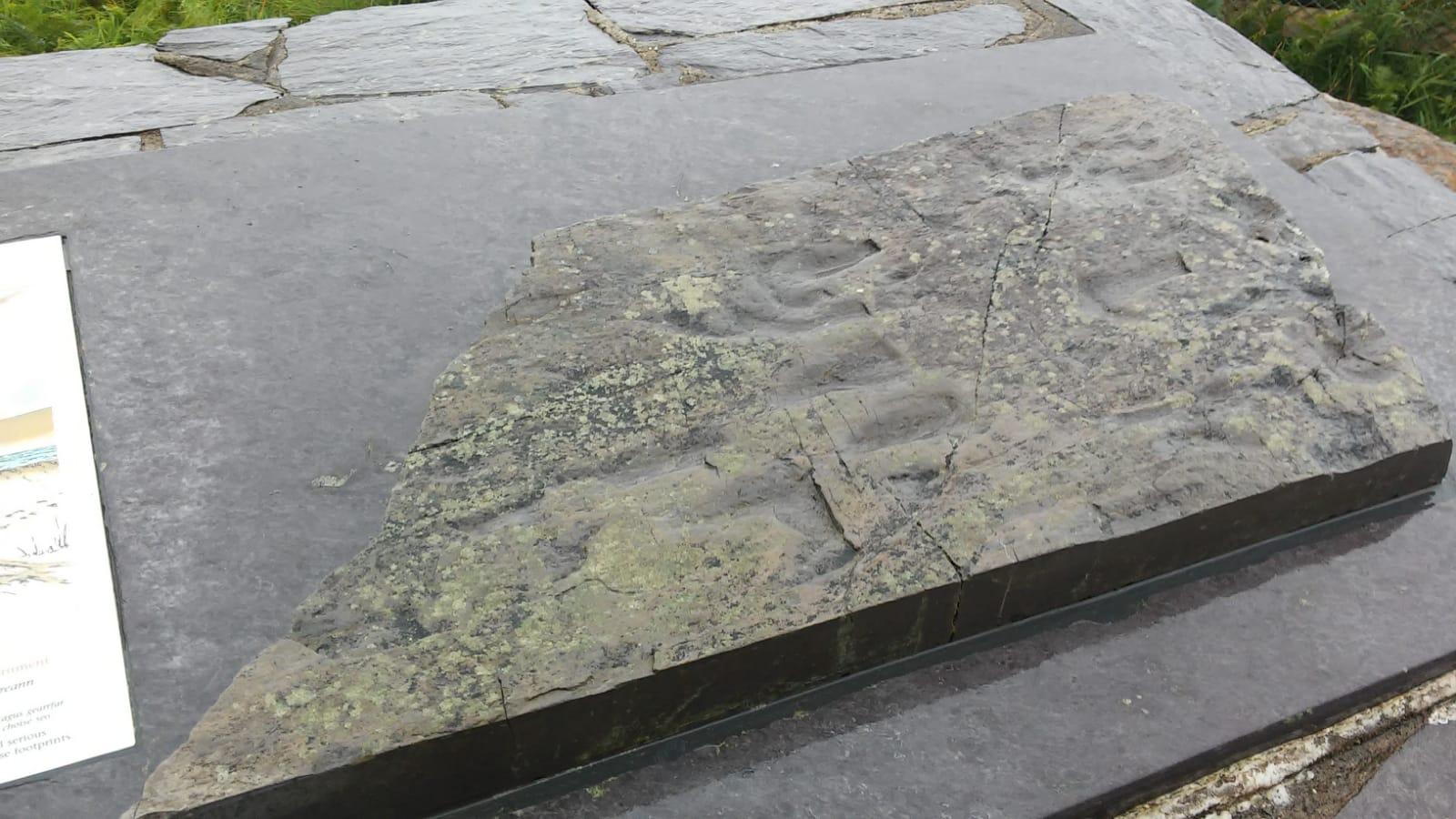 Tetrapode, Irlanda