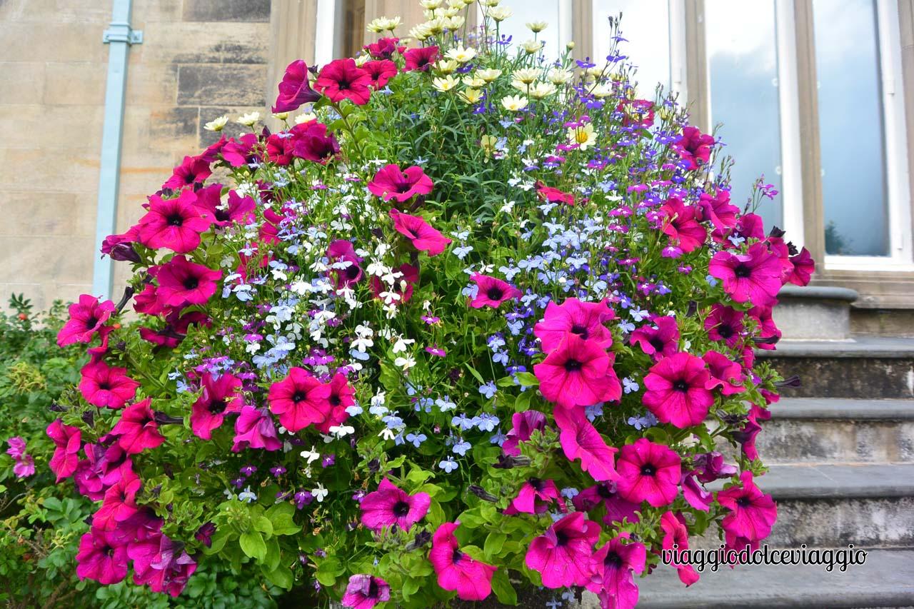 Muckross House, splendidi fiori