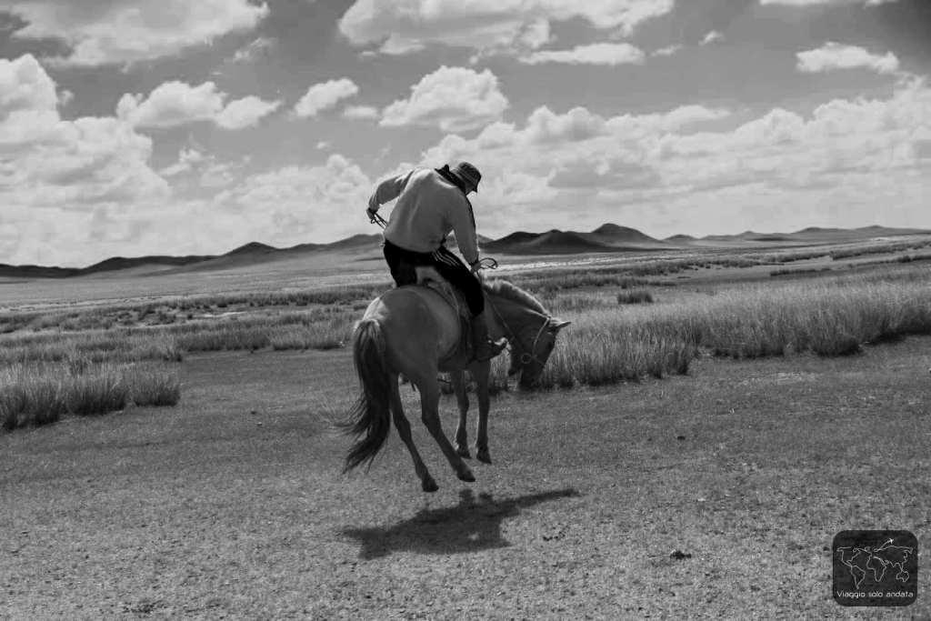 doma cavalli nomadi mongoli