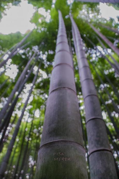 Bamboo forset