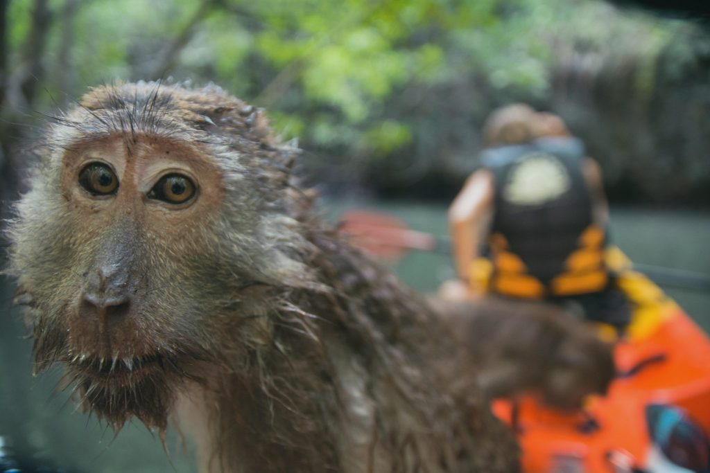 scimmie zona di krabi