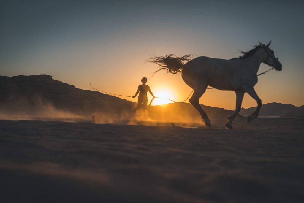 Workaway con cavalli in Giordania