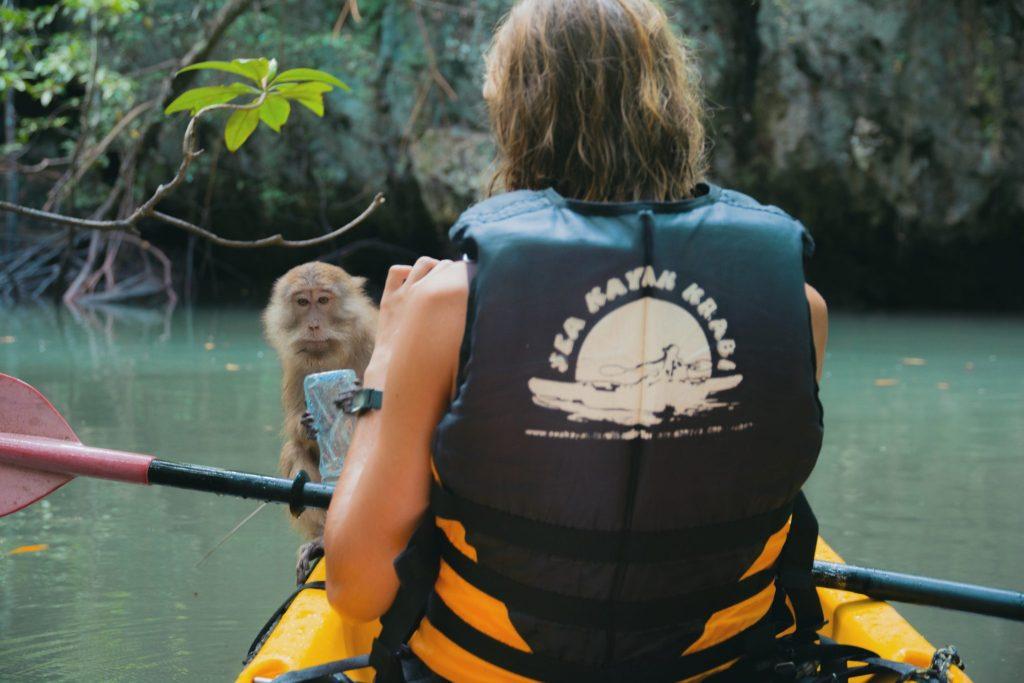 scimmie ladri in viaggio