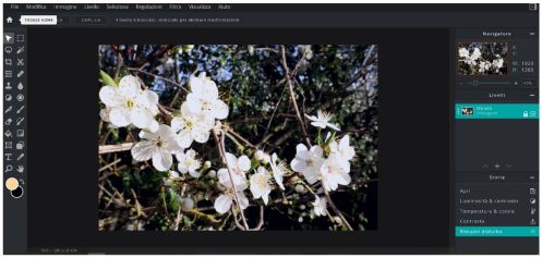 pixlr-editor-fotoritocco-fiori