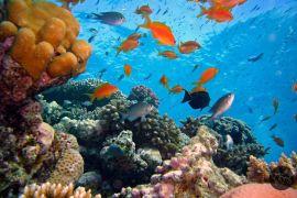 fotocamera subacquea guida