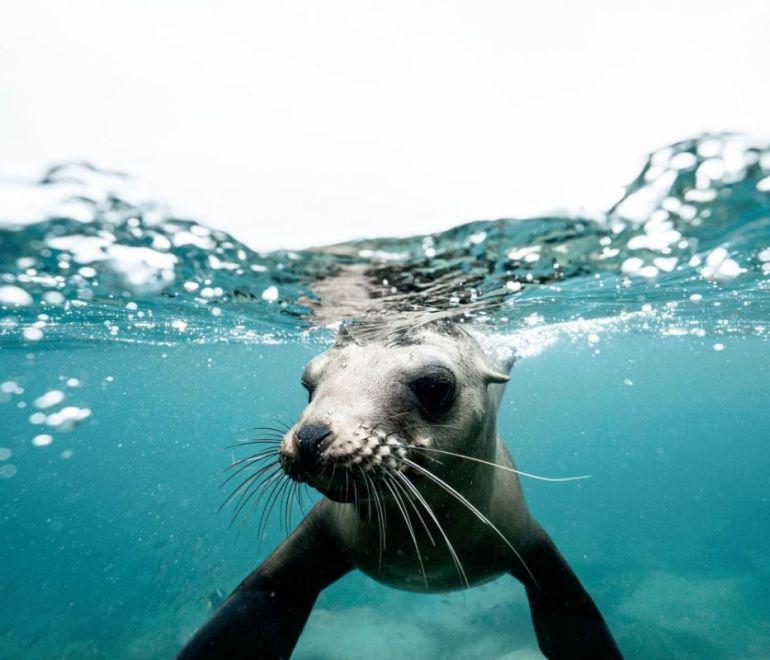 foto subacquea foca