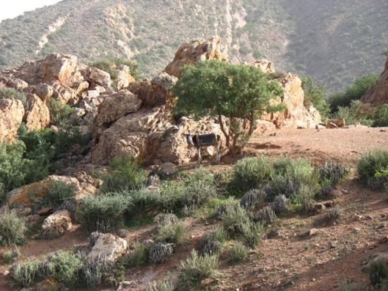 Marocco: viaggiare tra magiche atmosfere