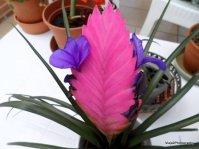Azul, Verde y Violeta: Planta en maceta