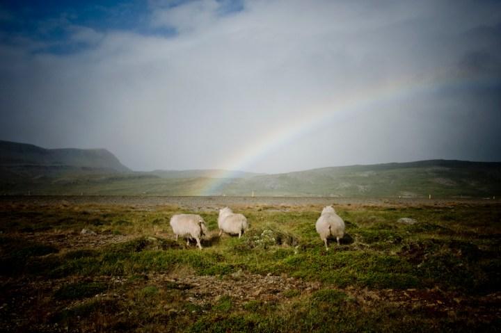 Viajar a Islandia. Brjanslaekur. Sonsoles Lozano