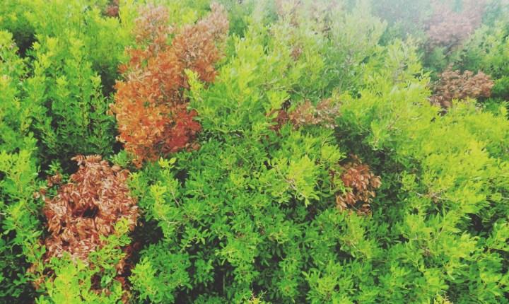 mallorca-naturaleza-sonsoles-lozano