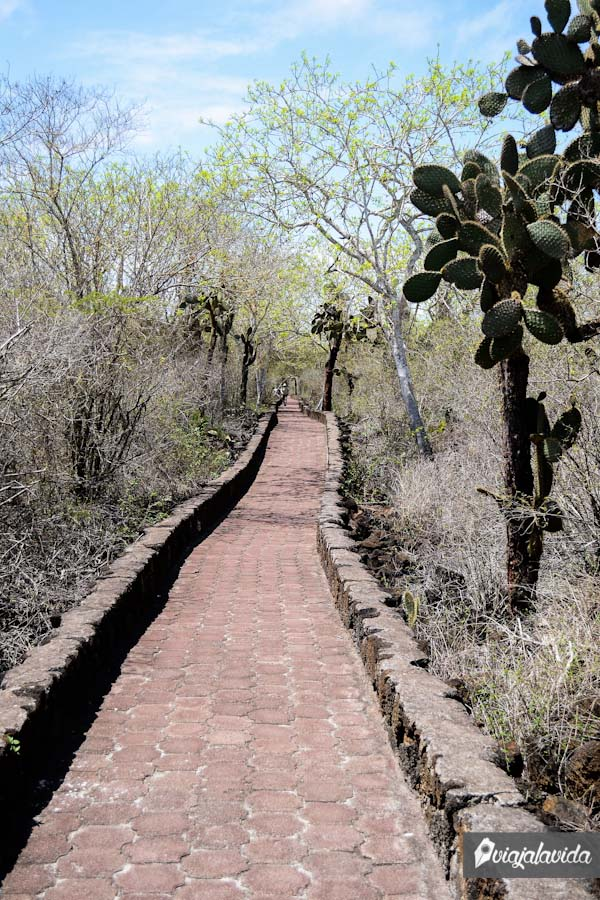El camino de Tortuga Bay.