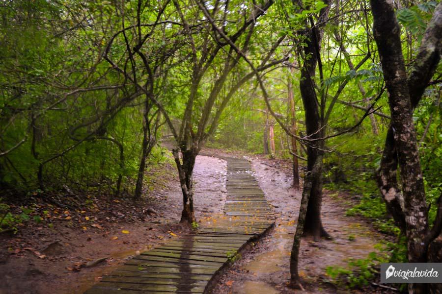 Entrando al bosque.