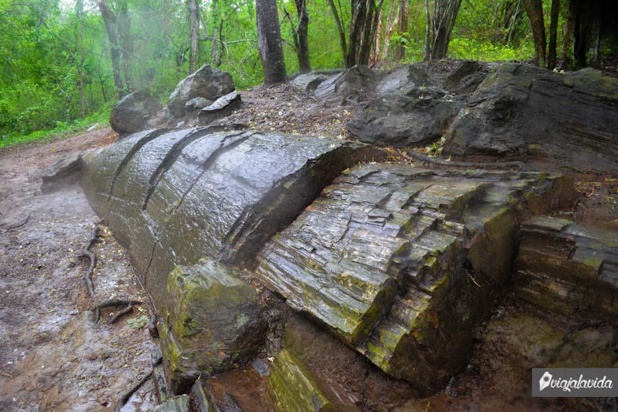 Madera transformada en piedra.