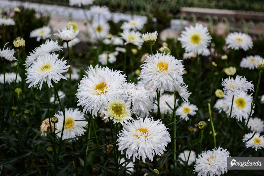 Flores del parque.