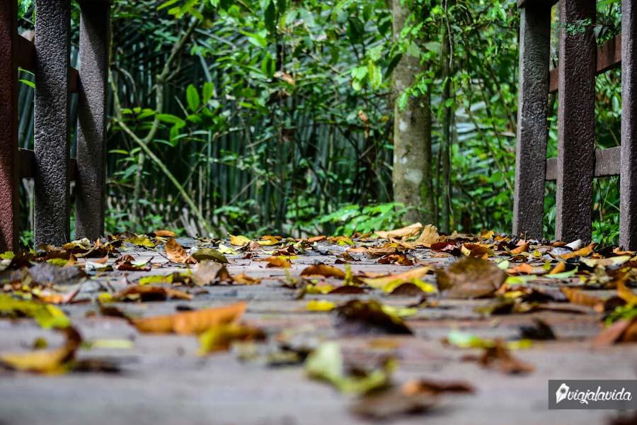 Puente de hojas.