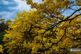 Amarillo por todos lados.