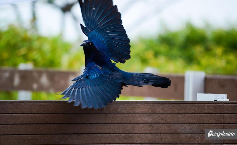 Paloma con las alas abiertas