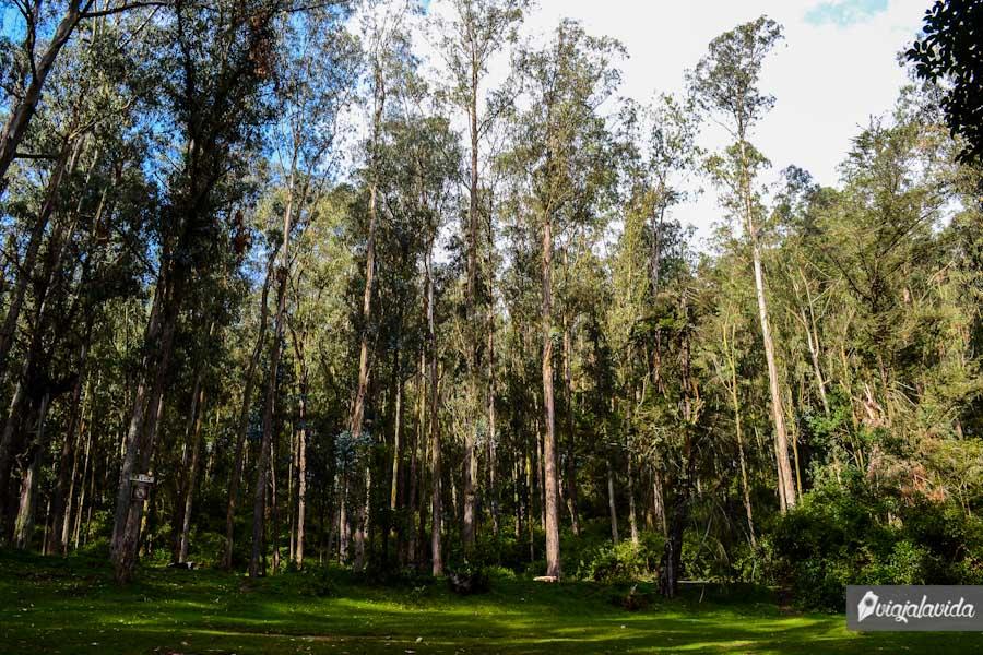 Árboles gigantes