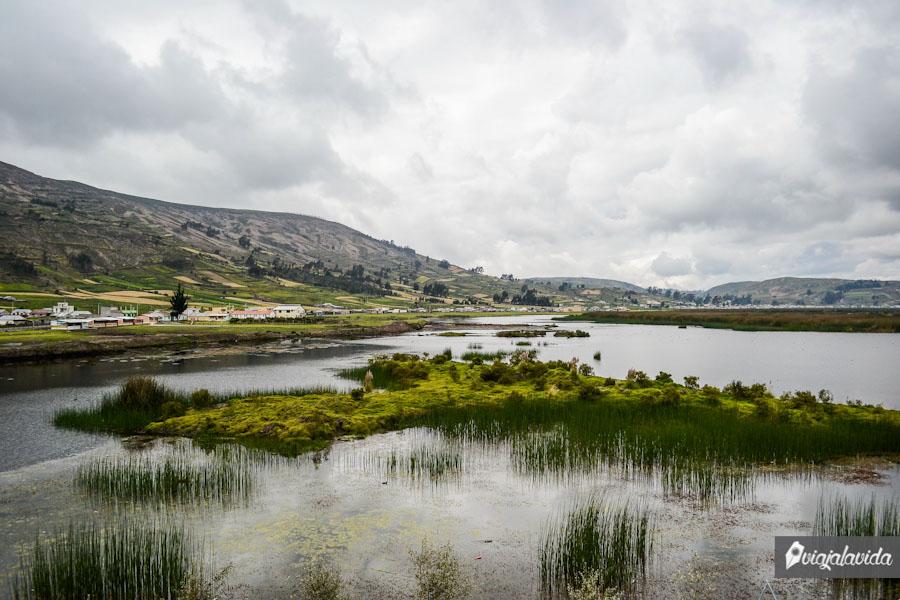 Laguna con vegetación