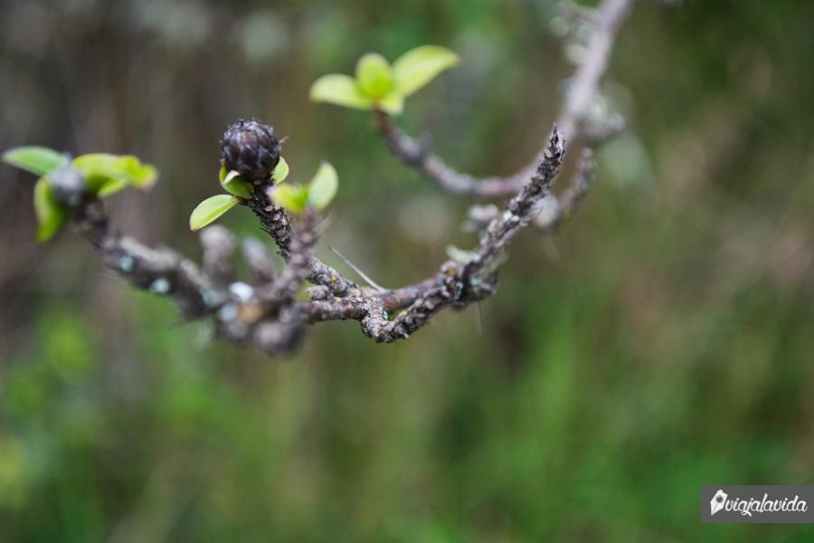 Planta peligrosa colgando