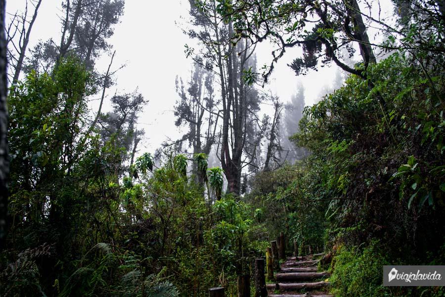 Grandes árboles con una escalera de madera