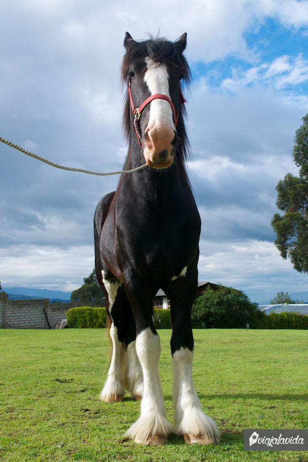 Hermoso caballo sobre el campo