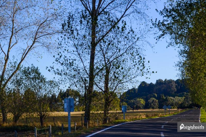 Árboles junto a la carretera.