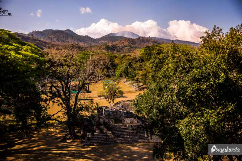 Naturaleza en medio de las Ruinas Mayas.