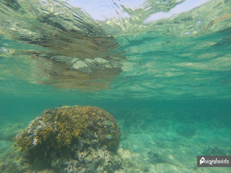 La segunda barrera de coral más grande del mundo.