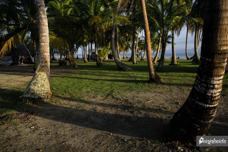 Palmeras en la Isla Perro Grande.