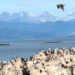 Conhecendo o Farol Les Eclaireurs e as ilhas de Ushuaia
