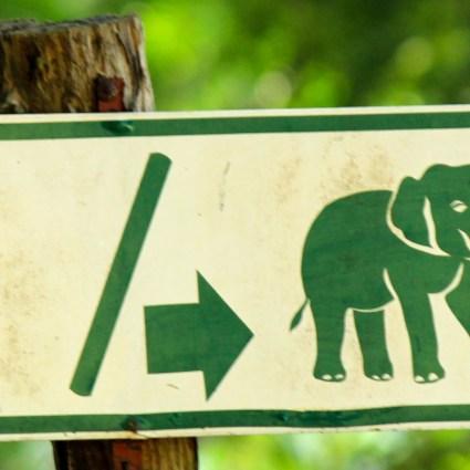 Passeio com elefantes em Chiang Mai
