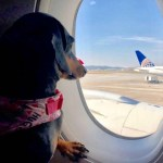 Como Levar seu Cachorro ou Gato para os EUA