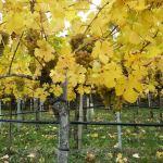 A melhor época para conhecer a Áustria? O outono