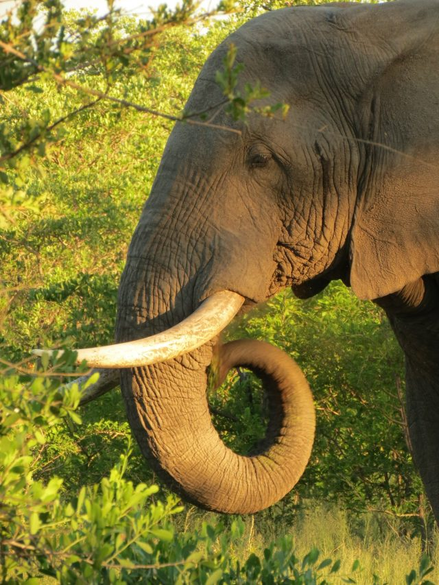 Roteiro para África do Sul e Moçambique_elefante_Viajando bem e barato