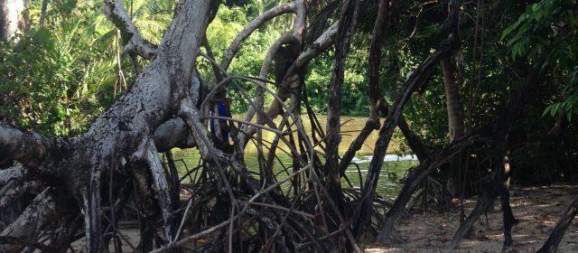 Nosso segundo dia de passeios na Ilha de Marajó