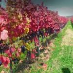 Os vinhos da Eslováquia – um roteiro para quem ama a bebida