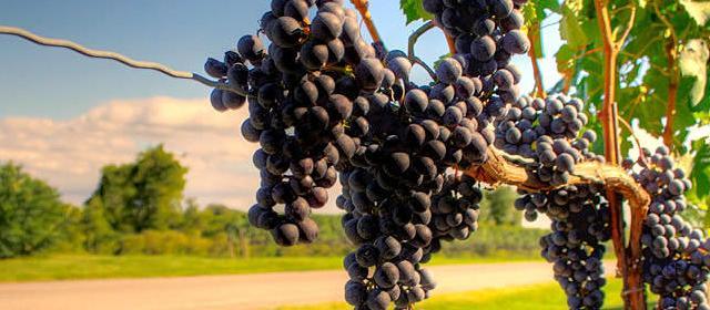 Despertar do Vale: dica de passeio na Serra Gaúcha pra quem ama bons vinhos e gastronomia
