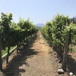 Tour na vinícola Casas del Bosque no Valle de Casablanca