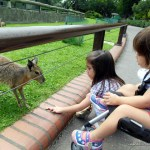 O Zoo de Buenos Aires: onde as crianças podem alimentar os animais!