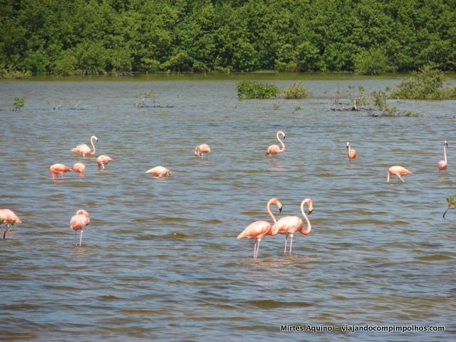 cayo-coco-flamingos