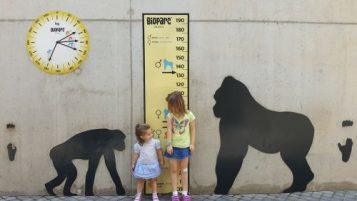 Gorila grande y pequeño