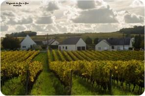 los valles del lora 3 viñedos en francia