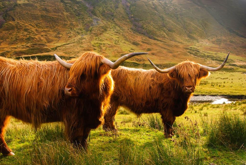 Vacas highlands