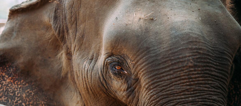 elefantes-na-tailandia-viajando-na-janela-capa-1
