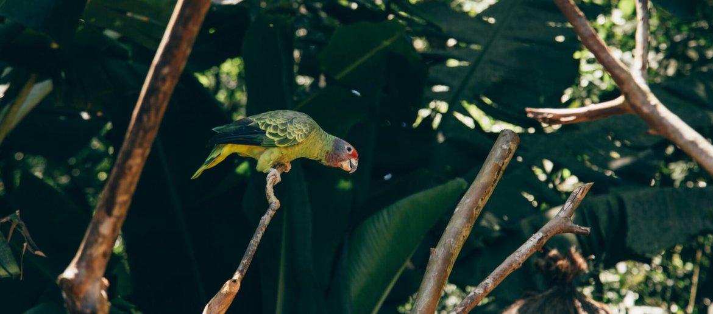 Gertrudes (papagaio-de-cara-roxa) - Backstage Experience, Parque das Aves