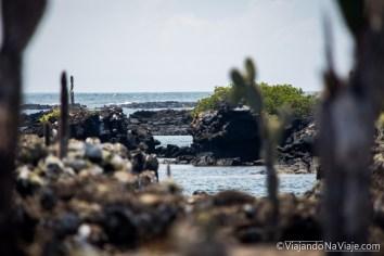 """Serie: Galapagos Experience 2017 // Fotos y Edición: Felipe """"Pipo"""" (viajandonaviaje.com) // Los Tuneles, Isla Isabela"""